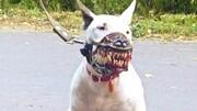 世界上6種最小可愛的寵物犬!隨便一只都能把你萌翻!