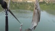 钓鱼时聊天不多, 但字字透着钓鱼人的经验和对鱼情的应变能力