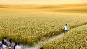 小麦和狗的生存之道