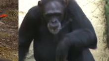 小猴子挑衅大黑狗,大黑狗表情一脸懵,看完忍住别笑!图片